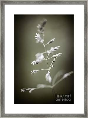 Flowering Grass Framed Print by Elena Elisseeva