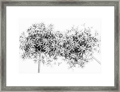 Flowering Onions Framed Print by Elena Elisseeva
