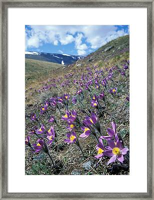 Flowers Framed Print by Anonymous