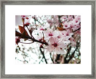 Flowers In Bloom Framed Print by Catherine Leis