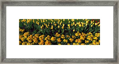 Flowers In Hyde Park, City Framed Print by Panoramic Images