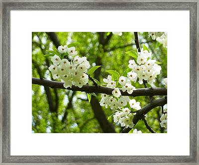 Framed Print featuring the photograph Flowers In The Spring by Mike Ste Marie