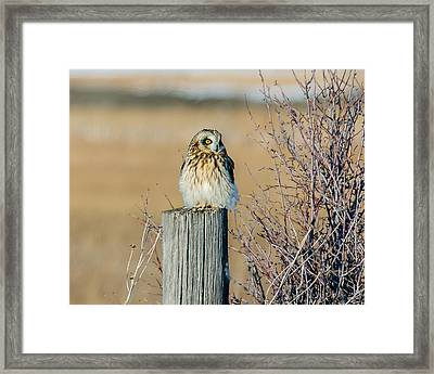 Fluff Beauty Framed Print by Yeates Photography