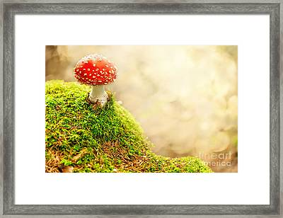 Fly Agaric Framed Print by Stefan Holm