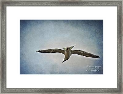 Flying Framed Print by Angela Doelling AD DESIGN Photo and PhotoArt