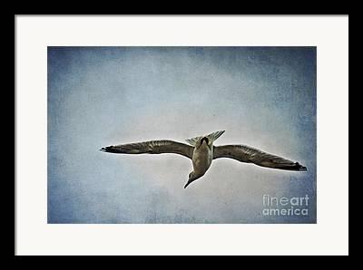 Flying Seagull Mixed Media Framed Prints