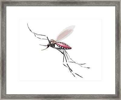 Flying Mosquito Framed Print by Sciepro/science Photo Library
