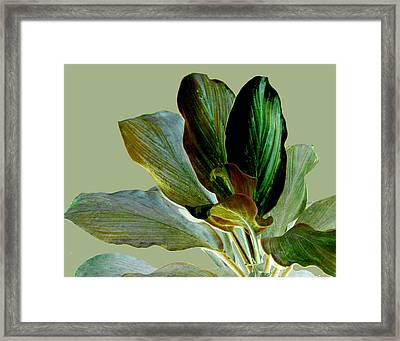 Foliage Fantasia Framed Print