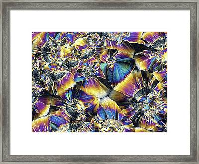 Folic Acid Crystals Framed Print by Alfred Pasieka