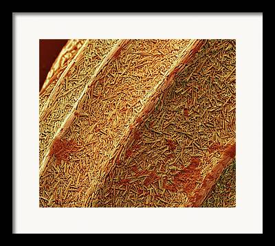 Scanning Electron Microscopy Photographs Framed Prints