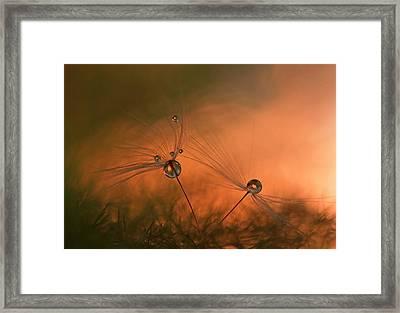 Forest Fire Framed Print
