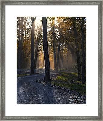 Forest Glow Framed Print by Larry Braun