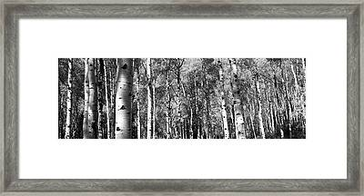 Forest, Grand Teton National Park Framed Print by Panoramic Images