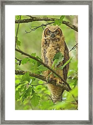 Forest King Framed Print