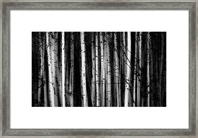 Forest Of Birch Trees  Alberta, Canada Framed Print by Ron Harris