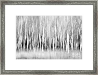Forest Trees Abstract In Black And White Framed Print by Natalie Kinnear