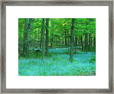 Forget-me-nots In Peninsula State Park Framed Print