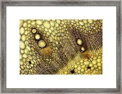 Forsythia Sp. Stalk Framed Print