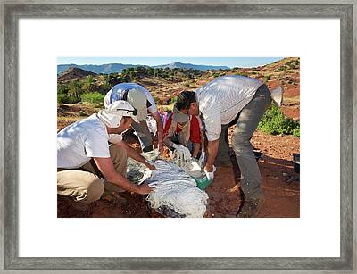 Fossil Excavation Framed Print by Philippe Psaila