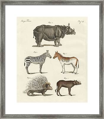 Four-footed Animals Framed Print by Splendid Art Prints
