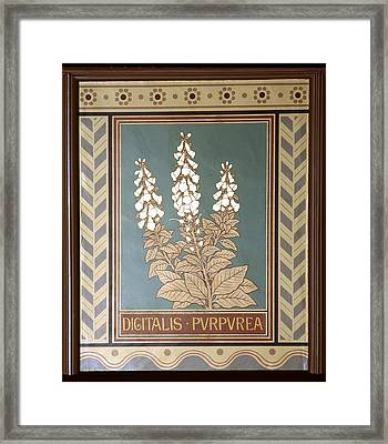 Foxglove (digitalis Purpurea) Framed Print by Science Photo Library