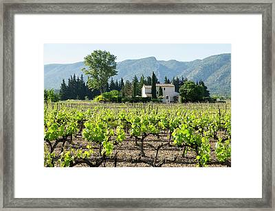 France, St Remy, Vineyards Luberon Framed Print by Emily Wilson