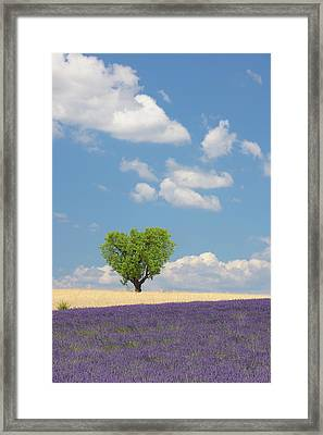 France, View Of Lavender Field With Tree Framed Print by Westend61