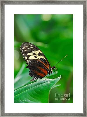 D5l15 Butterfly At Franklin Park Conservatory Framed Print