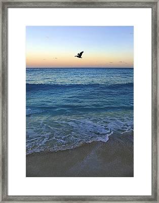 Free Bird Framed Print by Skip Hunt