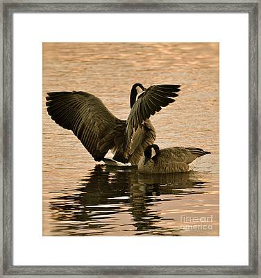 Framed Print featuring the photograph Freedom by Barbara Dudley