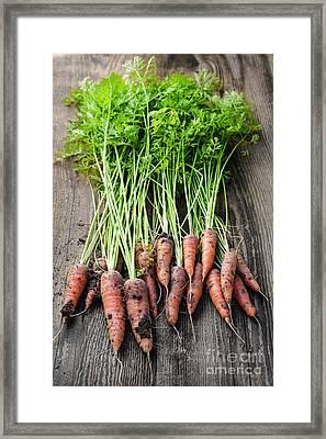 Fresh Carrots From Garden Framed Print by Elena Elisseeva