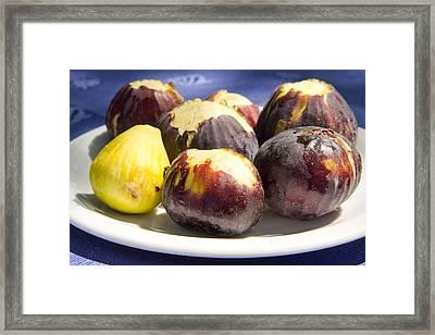 Fresh Figs Framed Print by Tom Gowanlock