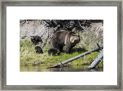 Fresh From Hibernation Framed Print