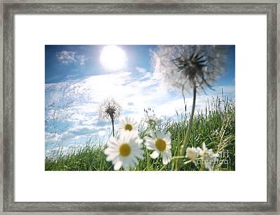 Fresh Meadow Background Framed Print by Michal Bednarek