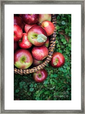 Fresh Picked Apples Framed Print