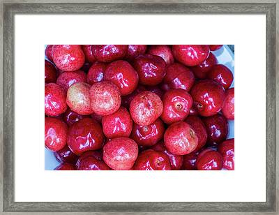 Fresh Picked Cherries In Whitefish Framed Print by Chuck Haney