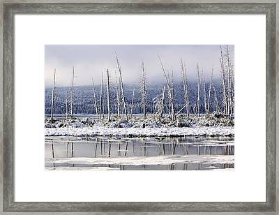 Fresh Snowfall And Bare Trees Framed Print by Ken Gillespie