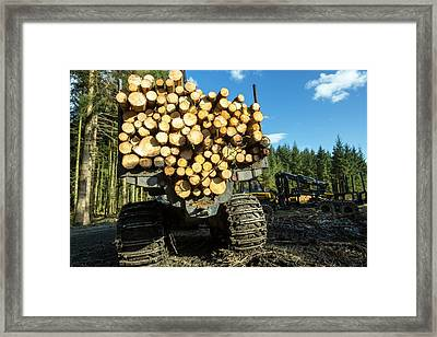 Freshly Cut Timber In Grizedale Forest Framed Print by Ashley Cooper