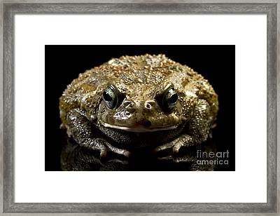 Framed Print featuring the photograph Frog by Gunnar Orn Arnason