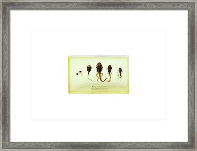 Frog Life Cycle Framed Print by Gregory Davies