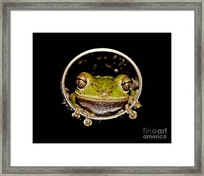 Framed Print featuring the photograph Frog by Olga Hamilton