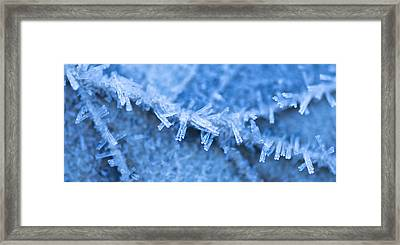 Frost Bitten Framed Print