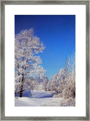 Frost On Trees In Winter Framed Print by Jim West