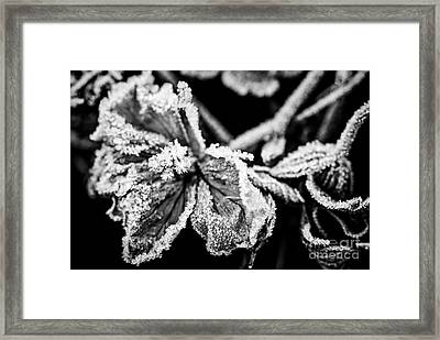 Frosty Flower Framed Print by Elena Elisseeva