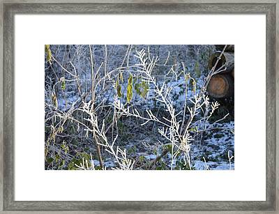Framed Print featuring the photograph Frozen by Felicia Tica