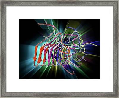 Fungal Prion Protein Framed Print
