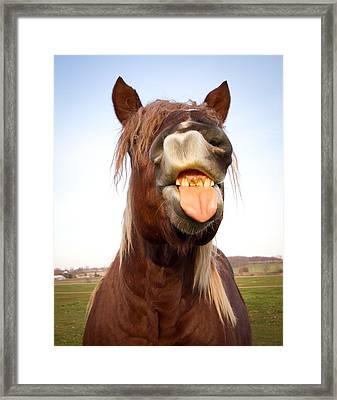 Funny Horse  Framed Print by Paulina Szajek