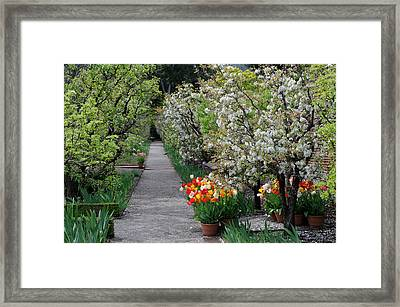 Framed Print featuring the photograph Garden by Haleh Mahbod