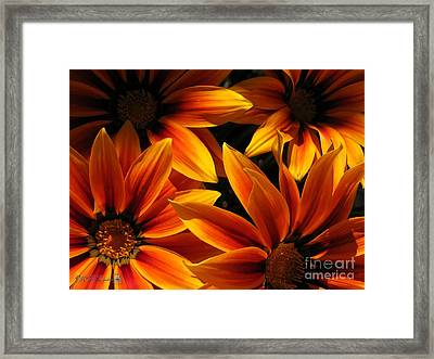 Framed Print featuring the photograph Gazania Named Kiss Orange Flame by J McCombie