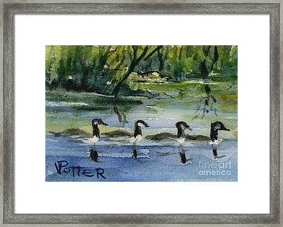 Geese In A Row Aceo Framed Print by Virginia Potter